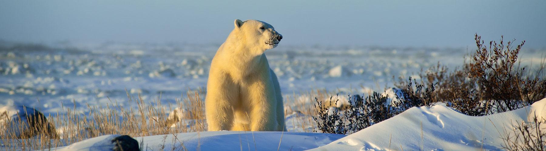 Arktische Abenteuer